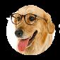 Billig hundebutikk med tilbud på hundeprodukter og utstyr