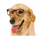Hundeutstyr kvalitetsprodukter for Hund til en rimelig pris