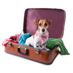 Bekledning bestill billig på nettet til Hund din