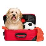 Bur og biltilbehør bestill billig på nettet til Hund din