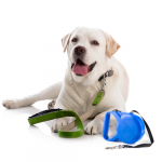 Bånder og halsbånder bestill billig på nettet til Hund din