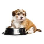 Fôrskåler bestill billig på nettet til Hund din