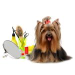 Pleie og pelstrimmere bestill billig på nettet til Hund din