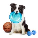 Sport og trening bestill billig på nettet til Hund din