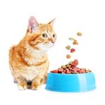 Bestel goedkoop Voerbakken en drinkbakken  online voor uw Kat