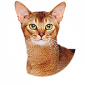 Koop goedkoop accessoires voor katten in de kattenwinkel