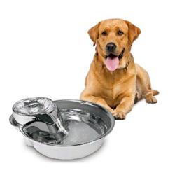 Foderautomat kvalitetsprodukter til Hund, til en fair pris