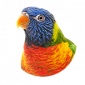 Online pet shop for bird supplies and accessories