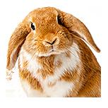 Προμήθειες για μικρά κατοικίδια ποιοτικά προϊόντα σε λογική τιμή για Μικρά ζώα
