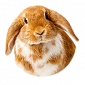 Ηλεκτρονικό κατάστημα κατοικιδίων για τις απαιτήσεις των τρωκτικών και των μικρών ζώων