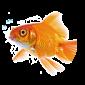 Akvaarioharrastajien nettikauppa akvaarioilla ja akvaariotarvikkeilla