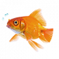Online aquariumwinkel voor aquariums, aquariumbevoorrading en accessoires
