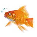 Akvarieprodukter kvalitativa Akvarieprodukter till schyssta priser