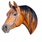Online horse shop for accessories and  horse supplies