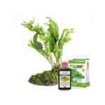 Entretien des plantes achat en ligne pas cher pour votre Aquariophilie