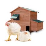 Hønsehuset bestill billig på nettet til Fugl din