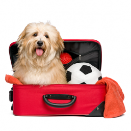 Productos de calidad Transportines y accesorios de viaje para Perros a precio justo