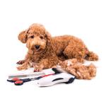 Klippemaskin for dyr bestill billig på nettet til Hund din