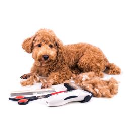 Kynsileikkurit laatutuotteita Koira edulliseen hintaan