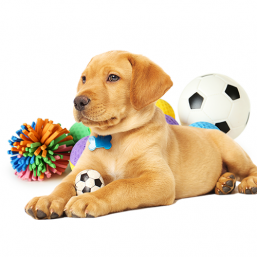 Toys quality products for Dog best prices