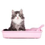 Maisons de toilette et bacs à litière achat en ligne pas cher pour votre Chat
