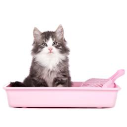 Katzenklo Qualitätsprodukte zum guten Preis für Katze