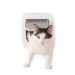 Kattluckor & skyddsnät beställ billigt på nätet till din Katt