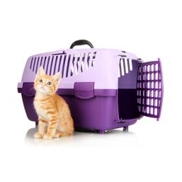 Kattetransport kvalitetsprodukter til Kat, til en fair pris