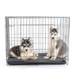 Cages d'intérieur achat en ligne pas cher pour votre Chien