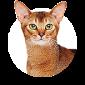 Achetez des accessoires pour chat pas chers sur le magasin pour chats