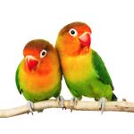 Savic Vogelsitzstangen online bestellen