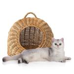 Cesta da trasporto ordina a buon mercato online per il tuo Gatto
