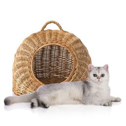 Kissan pajukori laatutuotteita Kissa edulliseen hintaan