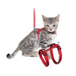 Pettorine per gatti ordina a buon mercato online per il tuo Gatto