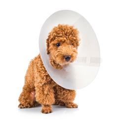 Beskyttelseskrave kvalitetsprodukter til Hund, til en fair pris