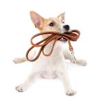 Bestel goedkoop Leren riem online voor uw Hond