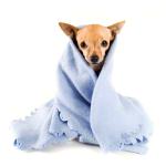 Hund Hundedecke billig online bestellen