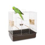 Undulat bestill billig på nettet til Fugl din