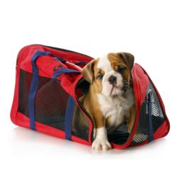 Kassetransport kvalitetsprodukter til Hund, til en fair pris