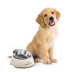 Hundefutter Behälter günstig für Hund