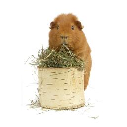 Heu & Streu für Kleintiere Qualitätsprodukte zum guten Preis für Kleintiere
