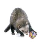 Bestel goedkoop Frettenspeeltje online voor uw Knaagdieren