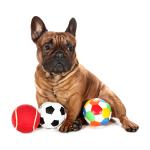 Encargue Pelotas de juguete para su Perros a bajo precio online