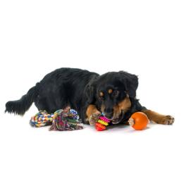 Legetov kvalitetsprodukter til Hund, til en fair pris