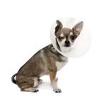 Beskytte krage bestill billig på nettet til Hund din