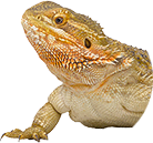 Reptile supplies quality products for Reptiles at a fair price
