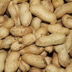 Versele Laga Erdnüsse mit Schale  11.3 kg