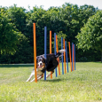 Products often bought together with Trixie Dog Activity Agility Slalom