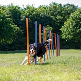 Trixie  Dog Activity Agility Slalom 115×ø3 cm pris