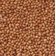 Agros Arachides en vrac commandez des articles à des prix très intéressants